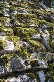 Wonder muurmos op oude steen Stock Foto's