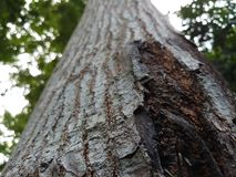 Wonder nature Close view of the bark of a tree royalty free stock photo