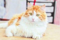 Wonder red cat Stock Images