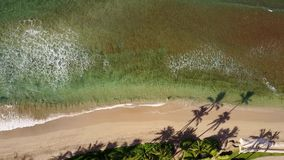 Beautiful photography of exciting ocean with bursting wave near coastline with exotic trees on island maui,hawaii stock footage