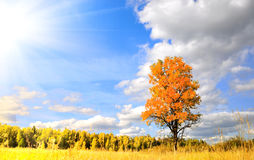 Wonderful autumn Royalty Free Stock Images