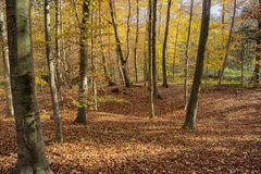 Autumn Forest. Colorful leaves in autumn forest Stock Photo