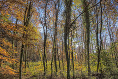 Wonderful Autumn Colors in  Forest Royalty Free Stock Images
