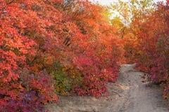 Wonderful autumn landscape. Stock Images
