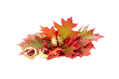 Free Wonderful Autumn Leaves And Chestnuts On A White. Royalty Free Stock Image - 11122496