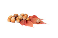 Wonderful ,autumn leaves and nuts on a white. Royalty Free Stock Image