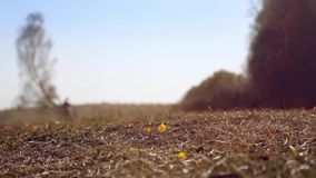 Wonderful autumn scenery. Dust rises with the wind stock video footage