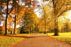 Wonderful autumnal scene in the park Royalty Free Stock Photos