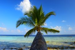 WONDERFUL BEACH WITH PALM TREE Stock Photo