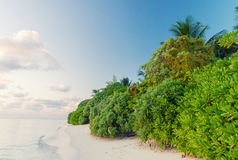 Wonderful beach of Thoddoo, Maldives Royalty Free Stock Photography