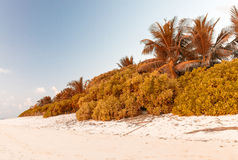 Wonderful beach of Thoddoo, Maldives Royalty Free Stock Image