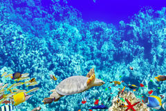 Wonderful and beautiful underwater world with corals and tropica Royalty Free Stock Image