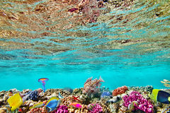 Wonderful and beautiful underwater world with corals and tropica Stock Images