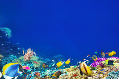 Wonderful and beautiful underwater world with corals and tropica Stock Photography