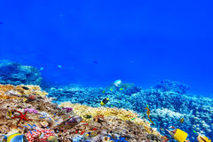 Wonderful and beautiful underwater world with corals and tropica. L fish Stock Photos