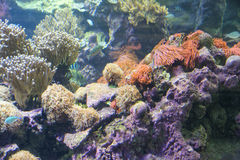 Wonderful and beautiful underwater world with corals and tropical fish Royalty Free Stock Photos