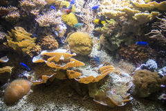 Wonderful and beautiful underwater world with corals and tropical fish. Stock Photography