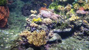 Wonderful and beautiful underwater world with corals and tropical fish. Royalty Free Stock Images
