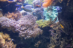Wonderful and beautiful underwater world with corals and tropical fish. Royalty Free Stock Photography