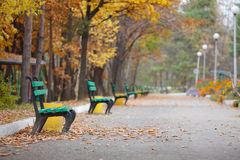 Wonderful bench in the autumn park stock photography