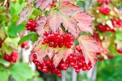 Wonderful berries Royalty Free Stock Photos