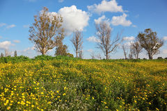 Wonderful blossoming spring field Stock Image