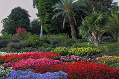 Wonderful bright flowerbeds Royalty Free Stock Image