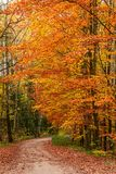 Wonderful and brown forest in the autumn. Europe royalty free stock photos