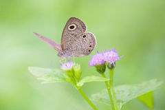 Wonderful Butterfly on grass flowers with green background Stock Photography
