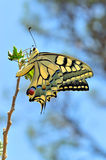 Wonderful butterfly in nature Royalty Free Stock Photo