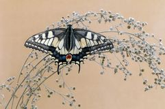Wonderful butterfly Papilio machaon  spread its wings  basking in the dry grass. Wonderful butterfly Papilio machaon  spread its wings on a summer day basking in royalty free stock photo
