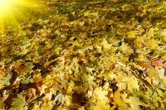 Wonderful carpet of  autumn foliage. Stock Images