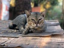Wonderful cat royalty free stock photos