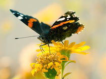 Wonderful colored small tortoiseshell butterfly Stock Images
