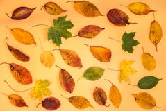 Wonderful colorful autumn leaves on light yellow background. Pleasant autumn colors. Beautiful fall leaves on beige background