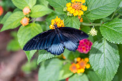 Wonderful colorful butterfly in the nature Stock Photo