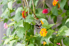 Wonderful colorful butterfly in the nature Stock Image