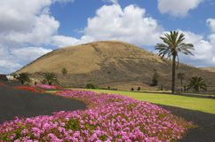Wonderful colors of Lanzarote. Not far from Yaiza, Lanzarote is a beautiful and colorful park with very nice flowers and palmtrees Royalty Free Stock Images