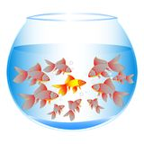 A wonderful concept of fish in an aquarium with an ounce. Of one against all Stock Photo