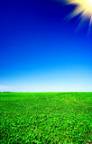 Wonderful cultivated soy field by early summer . Royalty Free Stock Photos