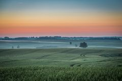 Wonderful dawn at foggy field in summer royalty free stock images