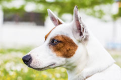 Wonderful dog. The dog, wonderful friend, sweet and intelligent. Ready to follow by giving loyalty for life Stock Images