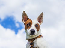 Wonderful dog. The dog, wonderful friend, sweet and intelligent. Ready to follow by giving loyalty for life Royalty Free Stock Photography