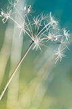 Wonderful dried flower Royalty Free Stock Photo