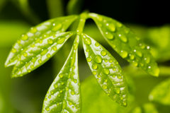 Wonderful of Droplet royalty free stock images