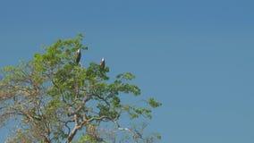 Wonderful eagles sit on green tree top under blue sky