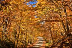 Wonderful Fall Color Road Stock Image