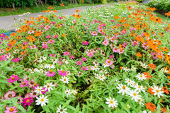 Wonderful Field with flowers in different colors. Wonderful Field with flowers in different colors in the park Royalty Free Stock Photo