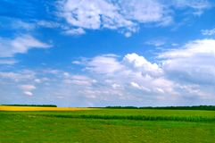 Wonderful field landscape. Under a blue sky stock images