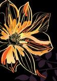 Wonderful flower Royalty Free Stock Photos